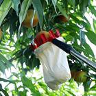 Outdoor Useful Fruit...
