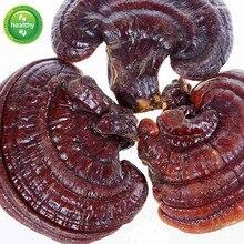 Lingzhi selvagem reishi cogumelo orgânico gannoderma liucium brilhante ganoderma