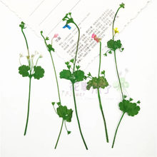 16 pces flor pressionada, natureza freshplant pétalas, diy ofício bookmark cartão de presente, flores seca decoração do quadro da foto do natal facial