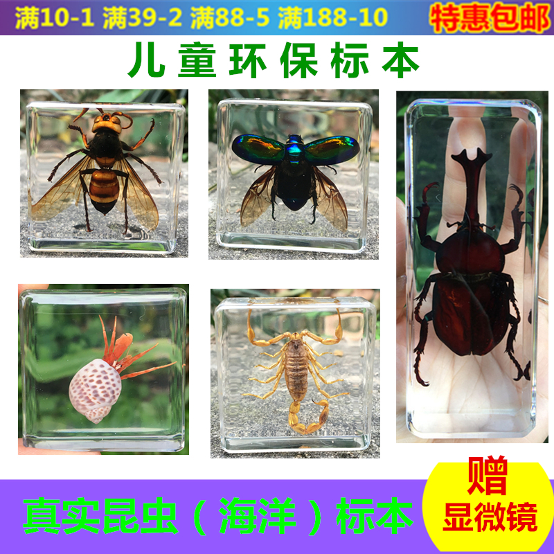 Marine Life Insect Amber Specimen Cicada Wasp Starfish  Stag Beetle Hermit Crab Conch Beetle