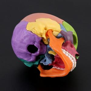 Image 2 - 15 sztuk/zestaw 4D zdemontowany kolorowa czaszka Model anatomiczny odpinany medyczne narzędzie do nauczania