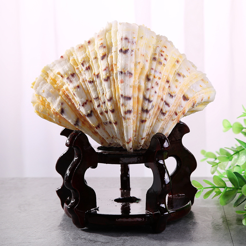 sells marine natural shells, lotus decorative materials, aquarium and Aquarium fittings wholesale