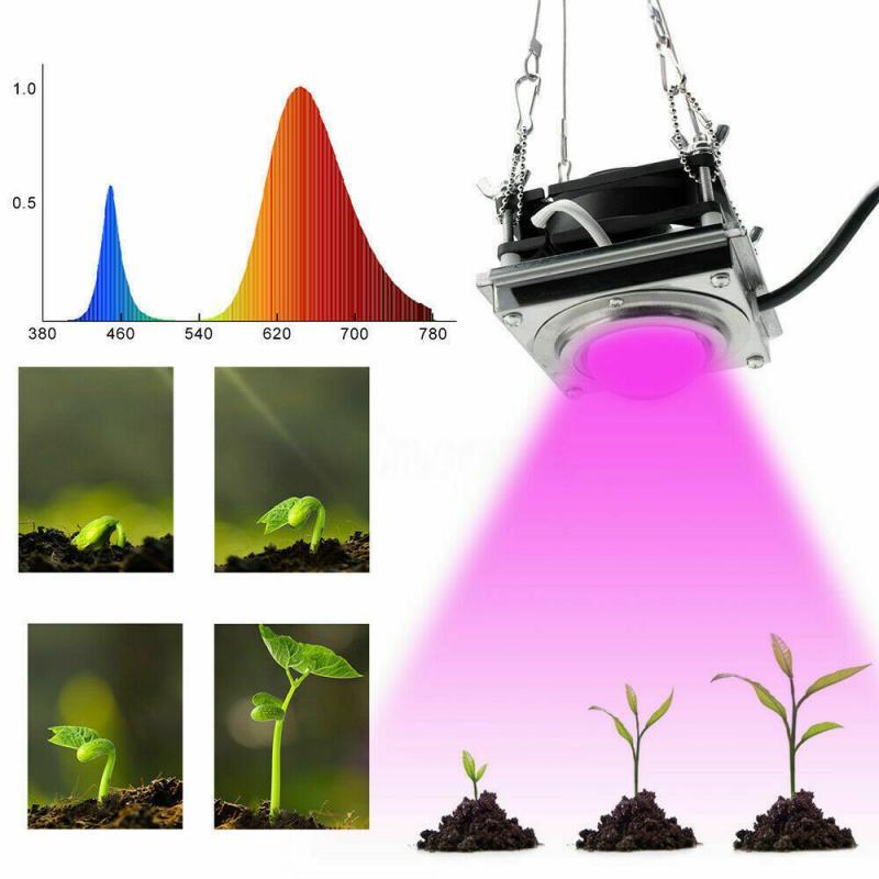 Full Spectrum COB Grow Light 60W Clip-on LED Powered Phyto Lamp Desktop Plant Growth Lighting For Indoor Flowers