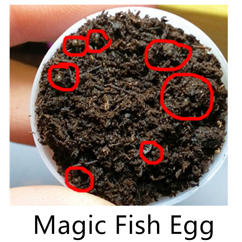 Magic Angel Fish Egg Soil Hatching Earth Real Fish Pet Biology Educational Learning Toys For Student Kids Boy Girl New Year Gift