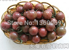 100 pcs Black pearl tomato vegetable fruit Balcony potted home garden free shipping(China)