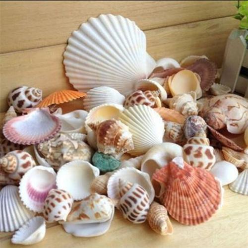 Pet Products Shells Aquarium Decor 100g/Bag Mixed Sea Beach Seashells Crafts Aquarium Decor Photo Props Aquarium Decor