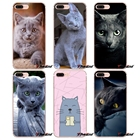 pet russian blue cat...