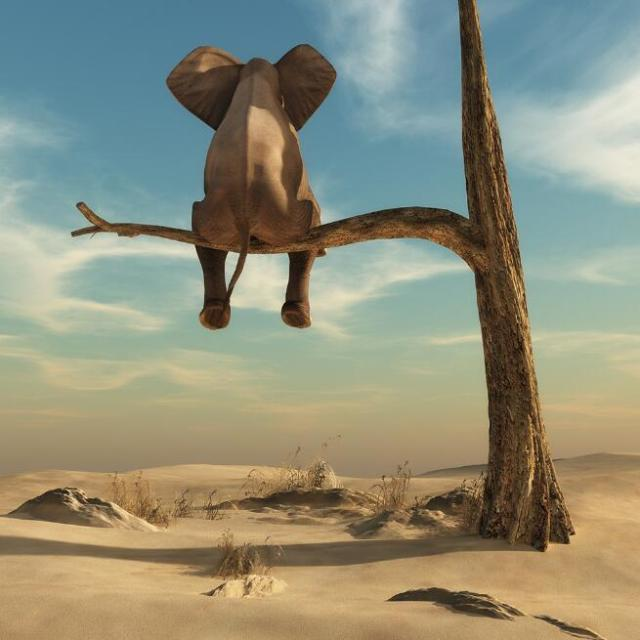Elephant Sits On Tree Branch Surrealism Painting Printed on Canvas 7
