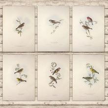 Dağ Linnet küçük Redpole Serin Finch avrupa kuşlar tuval boyama Vintage Kraft Poster kaplı duvar Sticker ev dekor hediye