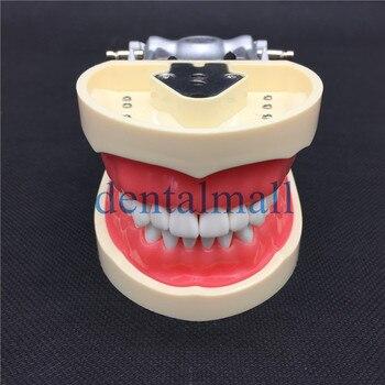 Removable Dental Tooth Arrangement Practice Model With 28 pcs Dental Granule Screw Teaching Simulation Model