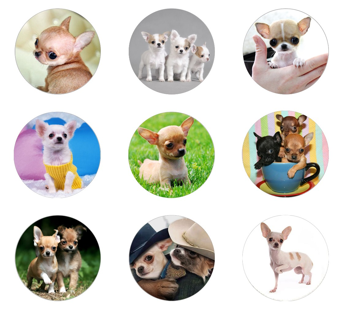 5pcs16mm20mm25mm Friendship Cute Chihuahua Cabochon Dog Handmade Photo Glass Drop Style Cabochons Jewelry Accessories