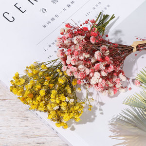 Миниатюрные декоративные сушеные цветы, букет цветов Babysbreath, натуральные растения, сохраняющие цветы для свадьбы, украшение для дома|Искусственные и сухие цветы|   | АлиЭкспресс