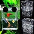 Aquarium Fish Breedi...