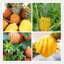 Hot Sale 100 Pcs/pack Fruits and vegetables bonsai pineapple fruit corn garden yellow,taste sweet(China)