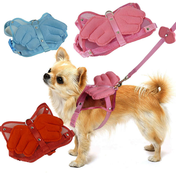 Teddy Little Angel Wing Fresh And Lovely Xiong Bei Tao Traction Belt Dog Pet Supplies
