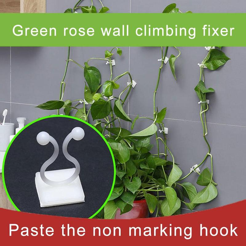 10pcs Invisible Wall Vines Fixture Climbing Vine Plant Fixer Paste No Trace Sticky Hook Of Home Balcony Garden Decoration Holder