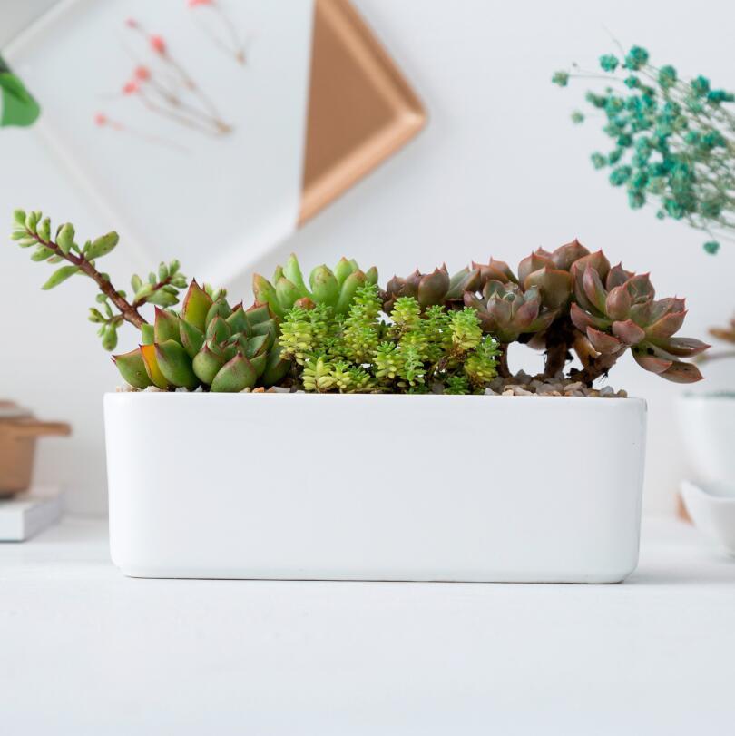 Clic White Ceramic Pot Home Planter