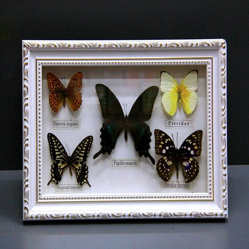 1 set of 5pcs Real Specimen butterfly specimen photo frame craft gift home decoration decoration home decoration