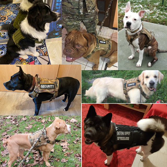 Service Canine Vest & Harness  4