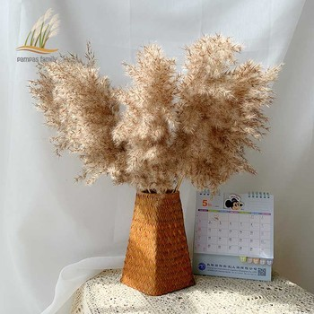 pampas grass decor plants home wedding dried flowers bunch feather natural phragmites tall 20-22''  plastic vase - discount item  20% OFF Festive & Party Supplies