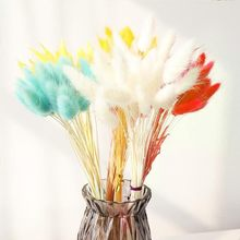 30 pçs secado colorido coelho flores buquê coelho cauda plantas naturais decoração para casa acessórios longos cachos decoração para casa