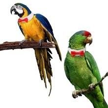 Одежда с птицами ручной работы попугай красный шелковый галстук Одежда нежный классный ошейник с бантиком декоративный воротник для костюм попугая s-xl