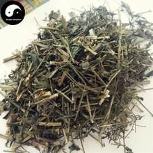 Chuan Xin Lian – herbe andrographe, herbe courante, Ku Dan cad