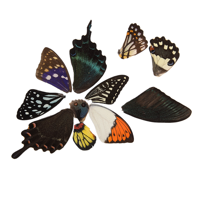 100Pcs Real Butterfly Wings  Random Gift DIY Jewelry Artwork Art Hand Craft