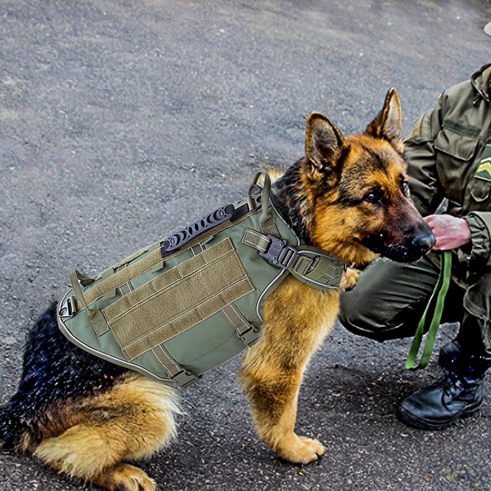 Köpek göğüs tasması