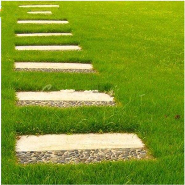 300-Pcs-Japanese-Forest-Grass-lawn-Perennial-Evergreen-Lawn-bonsai-plant-Beautiful-Garden-Ornamental-Plant-Easy (2)