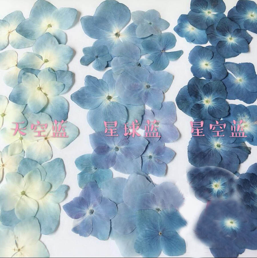 30pcs Pressed Blue Series Hydrangea Macrophylla Dried Flower For Nail Art Jewelry Bookmark Phone Case Invitation Card DIY
