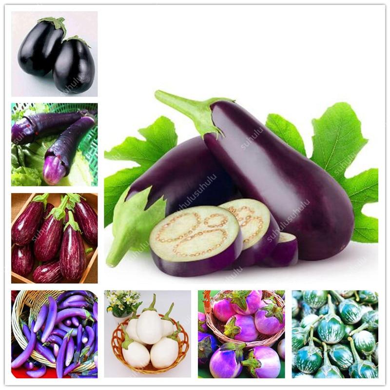 100 Pcs Rare Eggplant Bonsai Flower Potted Plant Organic Vegetable Trees Southern United States Bonsai Sweet Fruit Easy To Grow