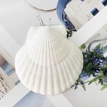 2 pces 10-14cm natural vieira coco concha leão espécime tanque de peixes decoração casa decoração casamento conchas para jóias