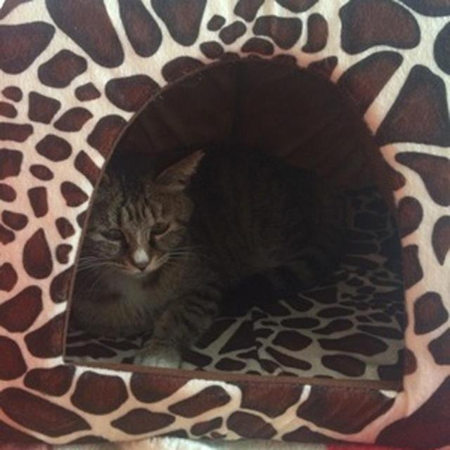 Fashionable Pet House  5