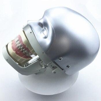 Dental Simulator Manikin Phantom Head demonstrations practical exercises tools dental model цена 2017
