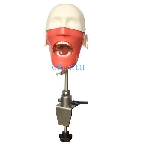 manequins dentarios e modelos phantom head para o ensino e aprendizagem em aulas dentarias modelo