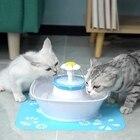Pet Fountain, 84Oz/2...