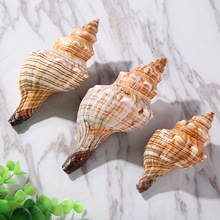 marine natural shells Watch conch Handmade accessories Home decorative aquarium fittings Fish tank decoration 500g