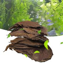 10pcs Natural Terminalia Leaves Reducing PH and Acidity of Balanced Water Island Almond Olive Leaf Fish Cleaning Fish Tank