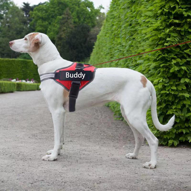 Personalized, Reflective and Adjustable Dog Harness Vest For All Dog Sizes 2