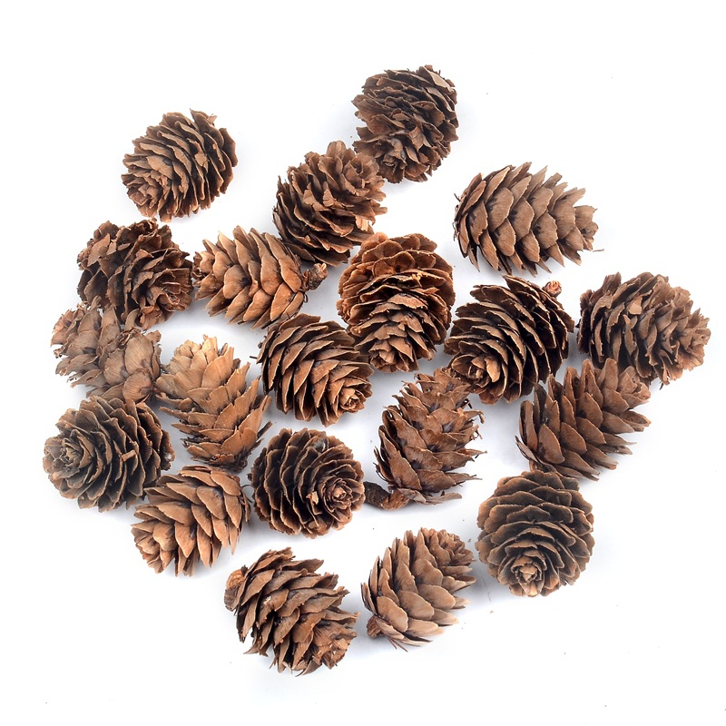 10pcs 3CM Natural Pine Nuts Fruit Artificial Simulation Wedding Party Decoration Family Garden Christmas Tree Accessories