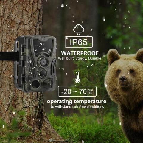 noturna floresta animais selvagens camera foto armadilhas