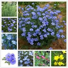 Plant Flowers Bath Salts Blue flax Essence 100Pcs XZZ-112