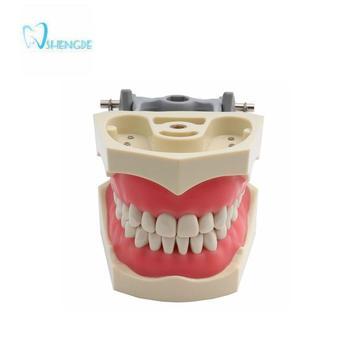 ADC Accredited Model Dental Teeth Model Dental Teaching Model Demonstration Tooth Model With Removable 32 pcs Teeth dental 28 pcs 1 1 demonstration permanent teeth teach study model dentaldentist practice product typodont