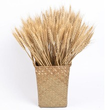 цена на 50pcs/lot Wheat Autumn Decoration Pampas Grass Craft Flowers Dried Flowers for Wedding Decoration Wheat