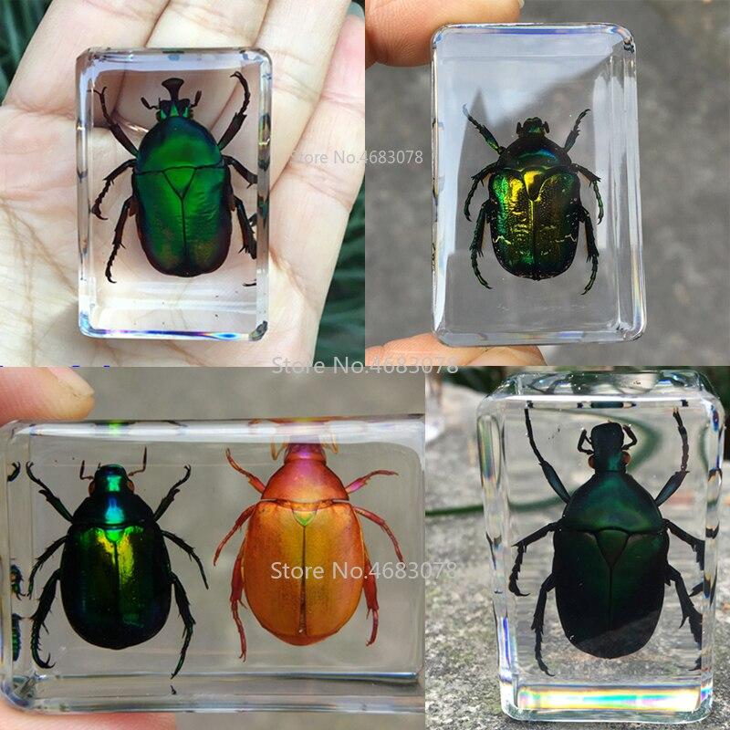 1 peça variada escaravelho espécime inseto em resina clara educacional explorar instrumento material de ensino escolar 44x29x18mm