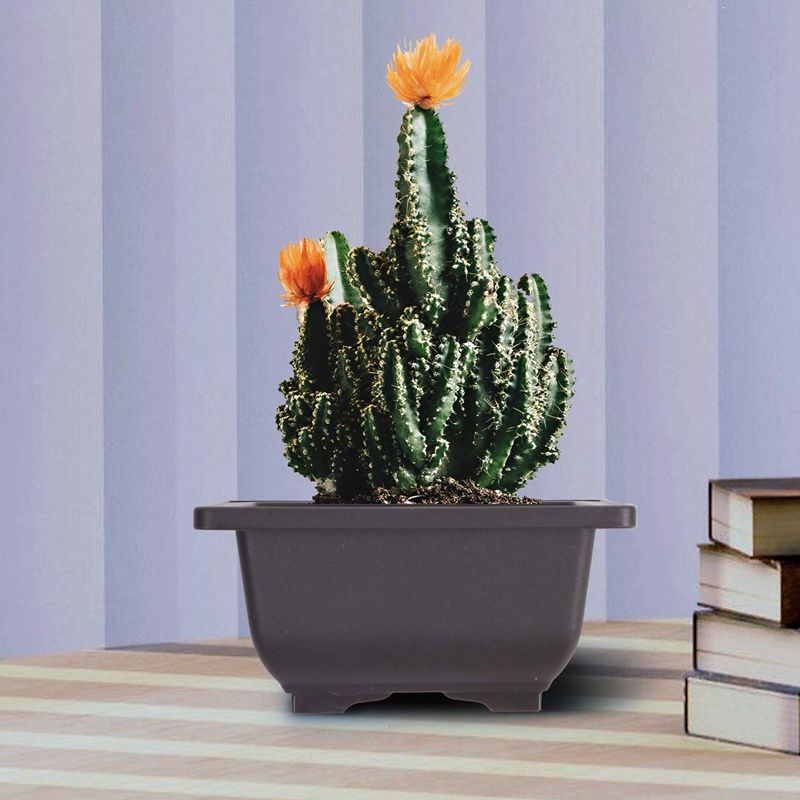 15 PCS 4.7 Inch Flower Pot, Square Plastic Bonsai Training Pot, Flower Succulent Flower Pot Container, for Garden, Interior, Hom