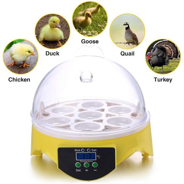 Mini 7 Egg Incubator Poultry Incubator Brooder Digital Temperature Farm Hatchery Egg Incubator Chicken Duck Bird Pigeon Hatcher 1