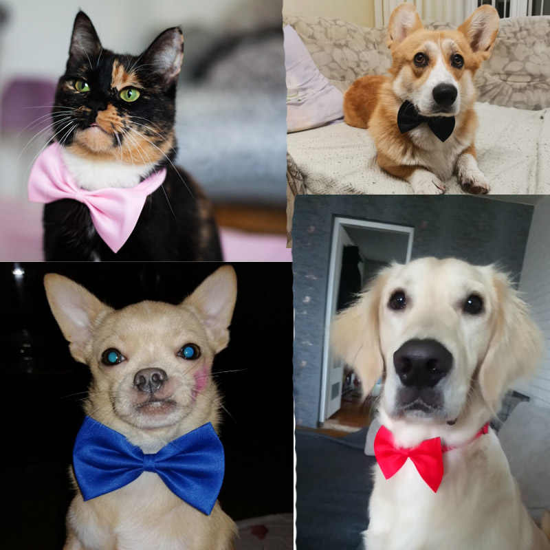 Pet Hond Kat Ketting Verstelbare Riem Voor Kat Kraag Honden Accessoires Hond Strikje Puppy Strikjes Hond Huisdier levert