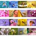 Diy алмазная живопись пчелы сбор нектар квадратный животный Алмазный Набор для рисования с круглыми камнями и полотном украшения по индивид...